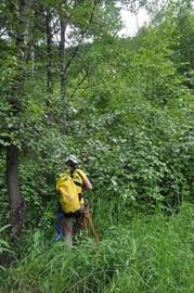 Photo of a Search & Rescue volunteer as she begins to climb back up an embankment full of thick brush.